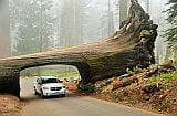 Sequoia_national